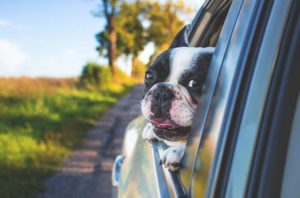 In auto con il cane: consigli di viaggio